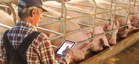 Hog farmer using FeedView